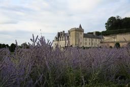 Lavande et château dans le parc de Villandry. Source : http://data.abuledu.org/URI/55e72902-lavande-et-chateau-dans-le-parc-de-villandry