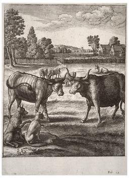 Le boeuf et le bouvillon. Source : http://data.abuledu.org/URI/5193d7a8-le-boeuf-et-le-bouvillon