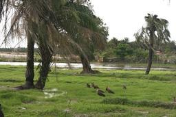 Le bolong au Cap Skirring en Casamance. Source : http://data.abuledu.org/URI/54934da6-le-bolong-au-cap-skirring-en-casamance