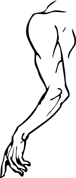 Le bras gauche. Source : http://data.abuledu.org/URI/501d7946-le-bras-gauche