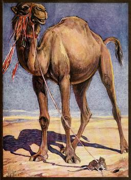 Le chameau et le rat. Source : http://data.abuledu.org/URI/54d3d058-le-chameau-et-le-rat