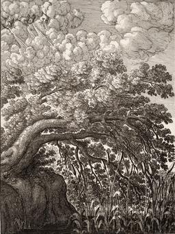 Le chêne et le roseau. Source : http://data.abuledu.org/URI/5193d2c6-le-chene-et-le-roseau