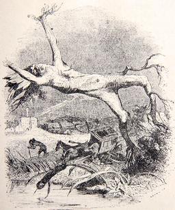 Le chêne et le roseau. Source : http://data.abuledu.org/URI/51f97105-le-chene-et-le-roseau
