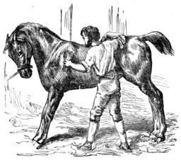 Le cheval et le palefrenier. Source : http://data.abuledu.org/URI/51962f0b-le-cheval-et-le-soldat