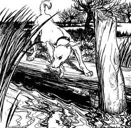 Le chien et son ombre. Source : http://data.abuledu.org/URI/517d4498-le-chien-et-son-ombre