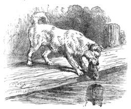 Le chien et son ombre. Source : http://data.abuledu.org/URI/51962b3c-le-chien-et-son-ombre