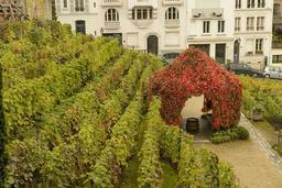 Le Clos Montmartre en automne. Source : http://data.abuledu.org/URI/5273d5b5-le-clos-montmartre-en-automne
