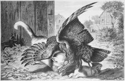 Le combat de l'aigle et des chats. Source : http://data.abuledu.org/URI/52ed640a-le-combat-de-l-aigle-et-des-chats