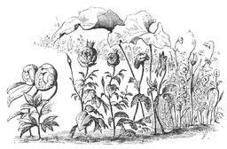 Le conte des fleurs de la petite Ida. Source : http://data.abuledu.org/URI/53497a73-le-conte-des-fleurs-de-la-petite-ida