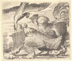 Le coq et la poule défendent leurs poussins. Source : http://data.abuledu.org/URI/54b2ed22-le-coq-et-la-poule-defendent-leurs-poussins