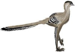 Le dinosaure Meilong. Source : http://data.abuledu.org/URI/53392a1f-le-dinosaure-meilong