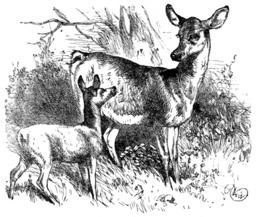 Le faon et la biche. Source : http://data.abuledu.org/URI/51962be2-le-faon-et-la-biche