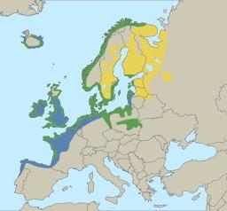 Le goéland argenté en Europe. Source : http://data.abuledu.org/URI/50f72ae5-le-goeland-argente-en-europe