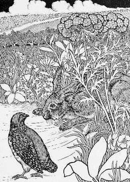 Le lièvre et la perdrix. Source : http://data.abuledu.org/URI/5199fc1e-le-lievre-et-la-perdrix