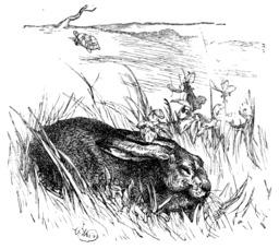 Le lièvre et la tortue. Source : http://data.abuledu.org/URI/51962aa9-le-lievre-et-la-tortue