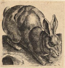 Le lièvre tapi. Source : http://data.abuledu.org/URI/54b2ed8e-le-lievre-tapi