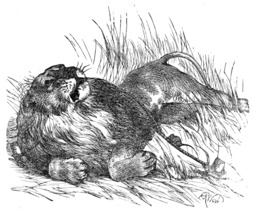 Le lion et le rat. Source : http://data.abuledu.org/URI/5196292e-le-lion-et-le-rat