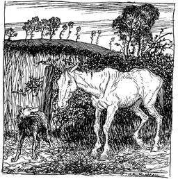 Le loup et le cheval. Source : http://data.abuledu.org/URI/517d684d-le-loup-et-le-cheval