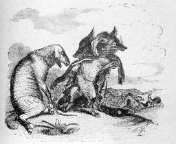 Le loup et le renard. Source : http://data.abuledu.org/URI/519cadff-le-loup-et-le-renard