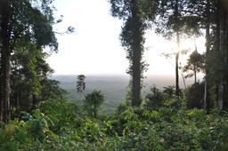 Le Mont Kaw en Guyane. Source : http://data.abuledu.org/URI/5277a419-le-mont-kaw-en-guyane