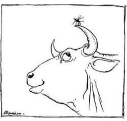 Le moucheron et le taureau. Source : http://data.abuledu.org/URI/517d39ac-le-moucheron-et-le-taureau