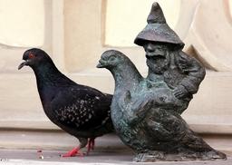 Le nain volant sur son pigeon. Source : http://data.abuledu.org/URI/51e82956-le-nain-volant-sur-son-pigeon