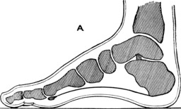 Le pied et ses os. Source : http://data.abuledu.org/URI/53ae0f53-le-pied-et-ses-os