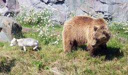 Le renard et l'ours. Source : http://data.abuledu.org/URI/5378da1c-le-renard-et-l-ours