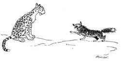 Le renard et le léopard. Source : http://data.abuledu.org/URI/517d6bb8-le-renard-et-le-leopard