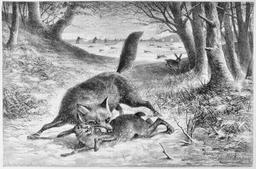 Le renard et les lapins. Source : http://data.abuledu.org/URI/53052a8b-le-renard-et-les-lapins