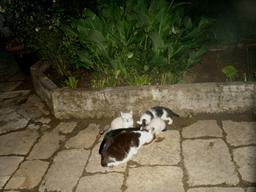 Le repas des chats. Source : http://data.abuledu.org/URI/5435baf0-le-repas-des-chats