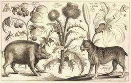 Le sanglier et le mastiff. Source : http://data.abuledu.org/URI/54b2eaa5-le-sanglier-et-le-mastiff