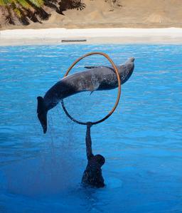 Le saut du dauphin à Ténérife. Source : http://data.abuledu.org/URI/54d0126c-le-saut-du-dauphin-a-tenerife