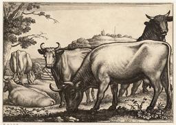Le taureau et le troupeau de vaches. Source : http://data.abuledu.org/URI/54b2eb3e-le-taureau-et-le-troupeau-de-vaches