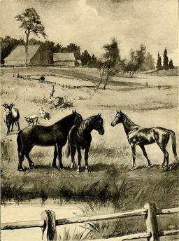 Les animaux de la ferme. Source : http://data.abuledu.org/URI/587eb2fe-les-animaux-de-la-ferme