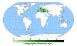 Les cerisiers dans le monde. Source : http://data.abuledu.org/URI/532c3e42-les-cerisiers-dans-le-monde