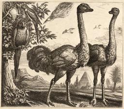 Les deux autruches et les oiseaux. Source : http://data.abuledu.org/URI/54b2f7a9-les-deux-autruches-et-les-oiseaux