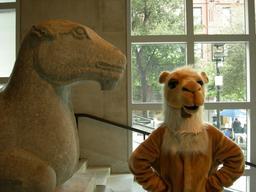 Les deux chameaux. Source : http://data.abuledu.org/URI/54d3219f-les-deux-chameaux