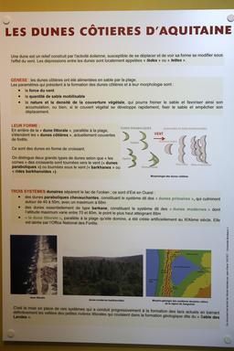 Les dunes côtières de Gascogne. Source : http://data.abuledu.org/URI/55620860-les-dunes-cotieres-de-gascogne