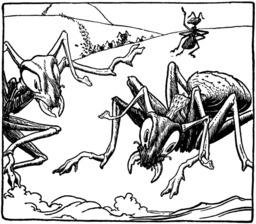 Les fourmis géantes. Source : http://data.abuledu.org/URI/51db1aec-les-fourmis-geantes