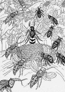 Les Frelons et les Mouches à miel. Source : http://data.abuledu.org/URI/519bf01d-les-frelons-et-les-mouches-a-miel