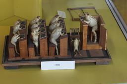 Les grenouilles à l'école. Source : http://data.abuledu.org/URI/543c0141-les-grenouilles-a-l-ecole