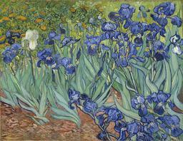 Les iris de Van Gogh. Source : http://data.abuledu.org/URI/572b98d9-les-iris-de-van-gogh