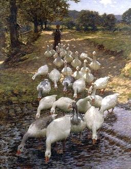 Les oies barbotent. Source : http://data.abuledu.org/URI/47f4beae-les-oies-barbotent
