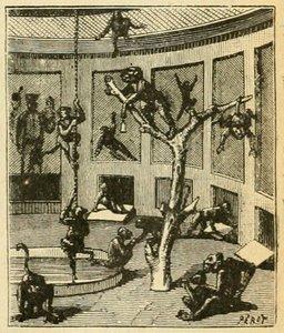 Les singes du Jardin des Plantes à Paris. Source : http://data.abuledu.org/URI/524f141d-les-singes-du-jardin-des-plantes-a-paris