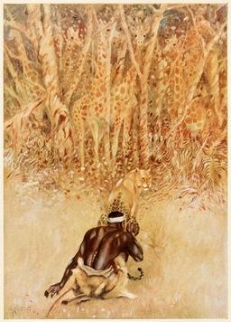 Les taches du léopard. Source : http://data.abuledu.org/URI/508464c5-les-taches-du-leopard