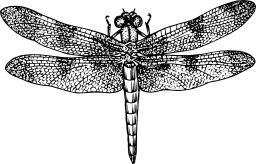 Libellule. Source : http://data.abuledu.org/URI/54d14d1d-libellule