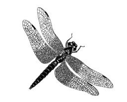 Libellule. Source : http://data.abuledu.org/URI/54d14d73-libellule