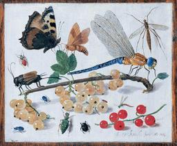 Libellule, insectes et fruits en 1653. Source : http://data.abuledu.org/URI/54d145c5-libellule-insectes-et-fruits-en-1653