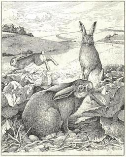 Lièvres et lapins au potager. Source : http://data.abuledu.org/URI/51fd156d-lievres-et-lapins-au-potager